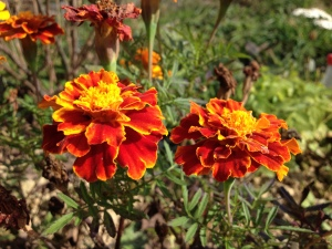 Східниця садиба Дримба