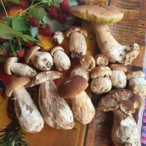 Східниця гриби