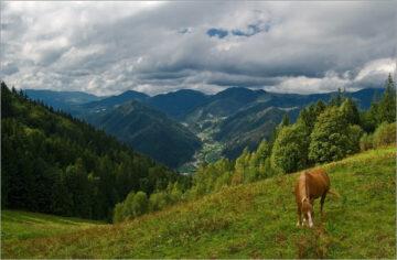 Лошадь на лугу в солнечный день