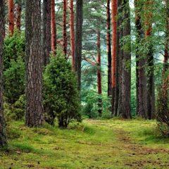Чистый лес солнечная погода тропа