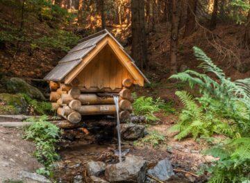 Лес источник вода